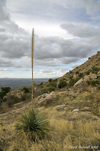 arizona cactus southwest nature clouds skies places deserts sonorandesert catalinastatepark sutherlandtrail