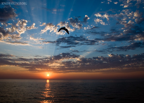 morning sky usa cloud sun chicago bird sol mañana fauna clouds sunrise illinois nikon unitedstatesofamerica lakemichigan amanecer ave cielo nubes nube crepuscularrays pájaro adlerplanetarium salidadelsol d80 18135mmf3556g nikonpassion rayoscrepusculares