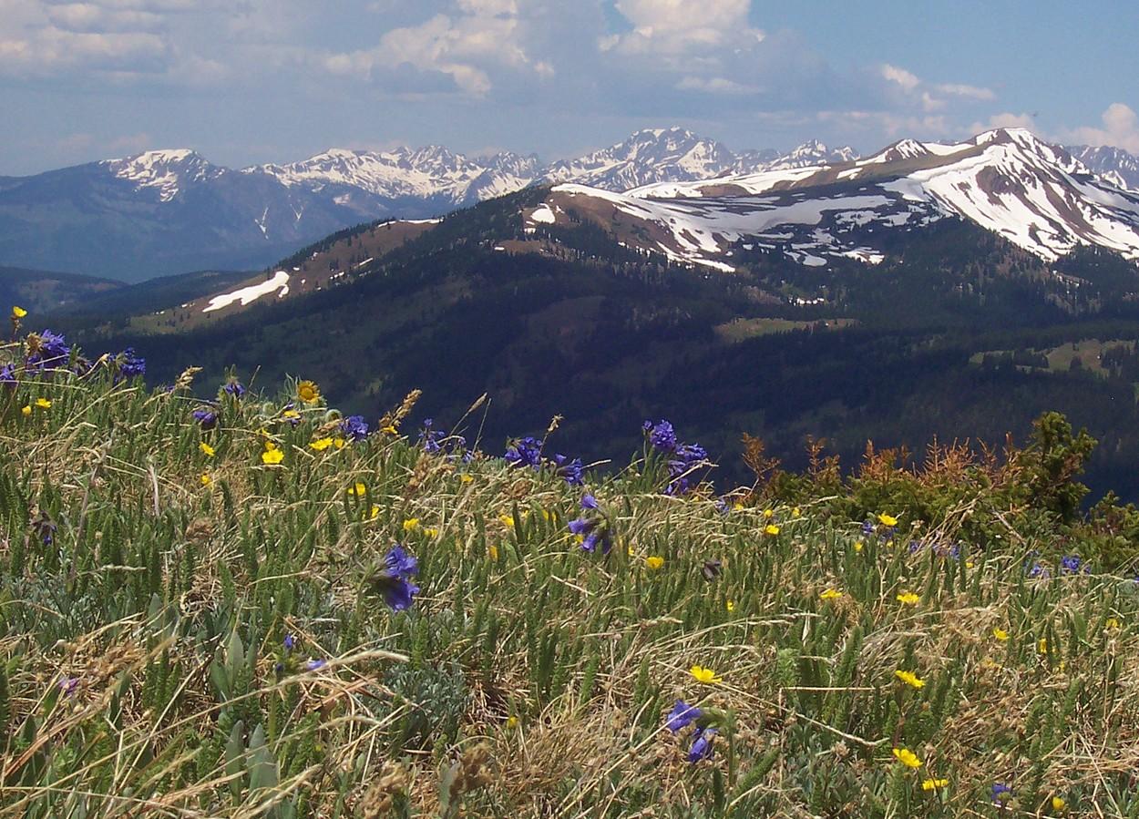Biome Project: Tundra by Sam Dersch