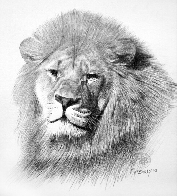 Pencil drawings of lions - photo#20