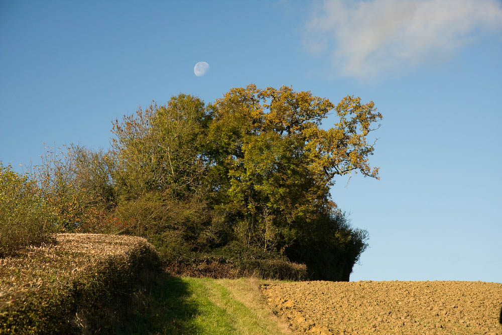 Moon and Oak tree