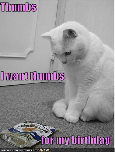 funny-pictures-cat-wants-thumbs-for-his-birthday