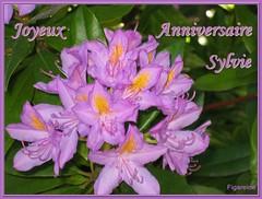 Joyeux Anniversaire Sylvie Nous Pensons Toujours A Toi N Flickr
