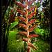 Robert's garden, Costa Rica (13)