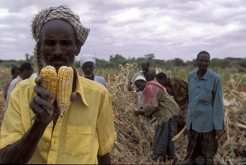 肯亞當地人們正在收成玉米。(圖:World Bank Photo Collection)