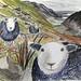 Herdwick flock by Bexlee