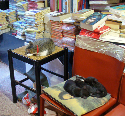 Cats of the Acqua Alta bookshop, Venice October 2007