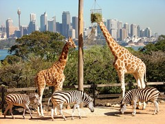 Observe the wild in natures lap - Things to do in Sydney