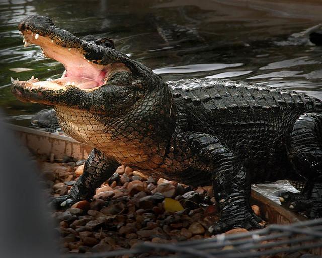 Reptile Gardens Black Hills Flickr Photo Sharing