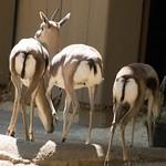 Los Angeles Zoo 042
