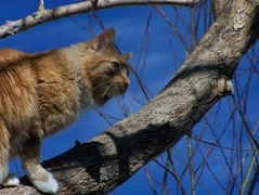 animal, branch, small to medium-sized cats, pet, mammal, fauna, cat, wild cat, whiskers, wildlife,