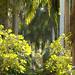 Aswan Botanical Gardens, Aswan