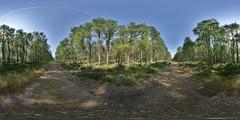 Aviemore: Track Speybank Kincraig Scotland Equirectangular