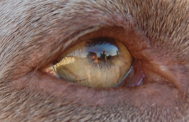 Header of Auge