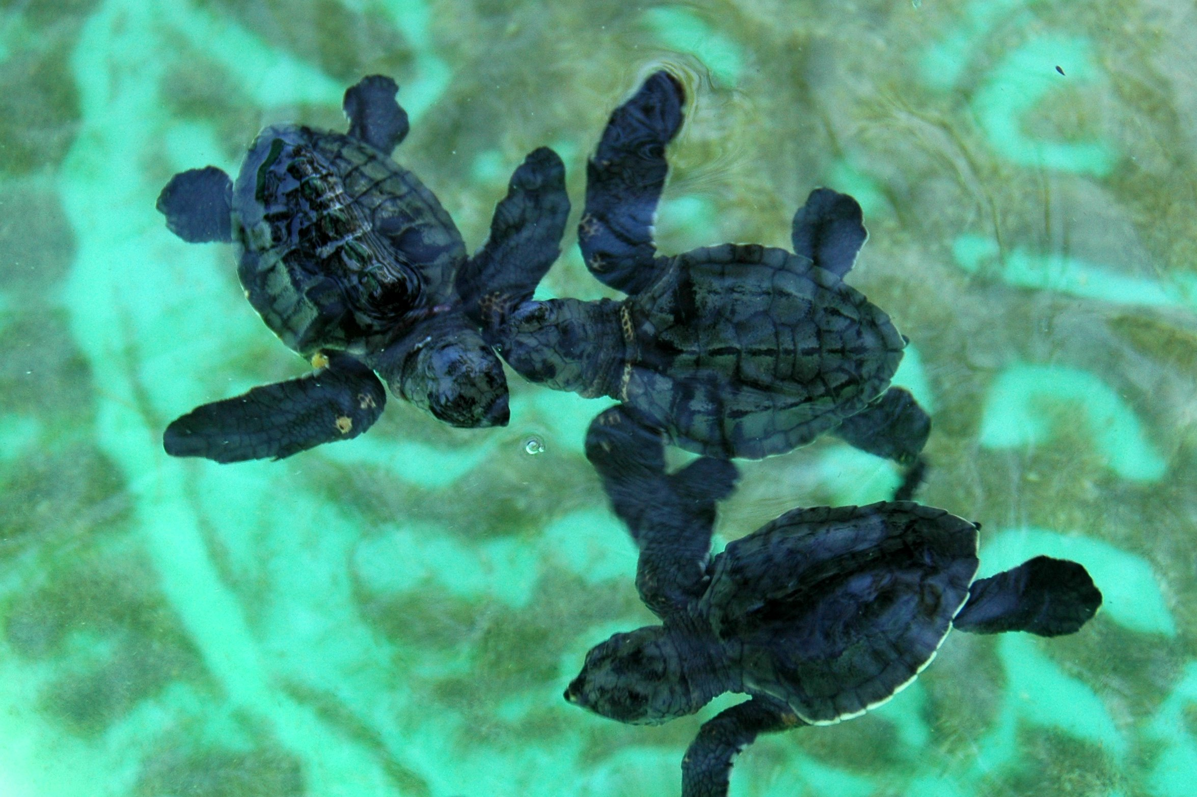 Image Result For Cute Baby Turtle