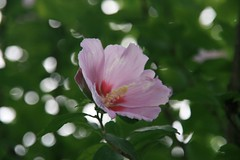 Flower in Osaka castle park
