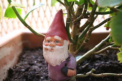 Little gnome at Ami's bedroom!