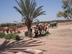 Near Menara palace, Marrakech