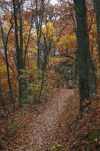 autumn hiking tennessee housemountain knoxcounty housemountainstatenaturalarea