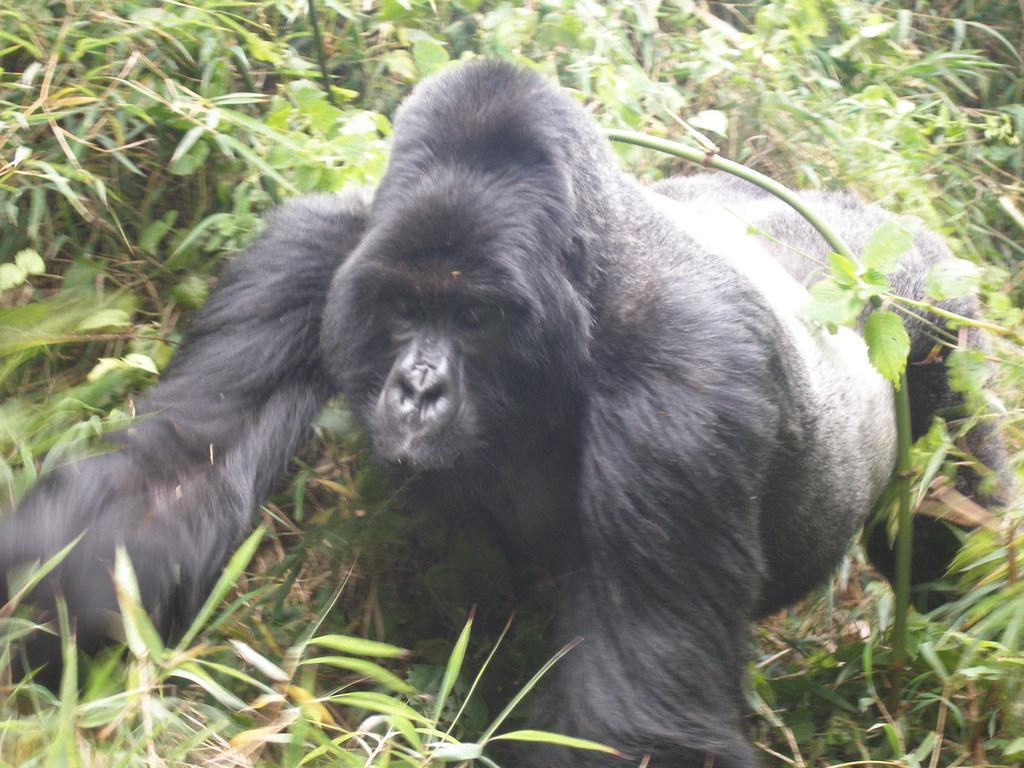 Rwanda049