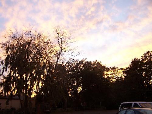 sunset moss bainbridge oakcity