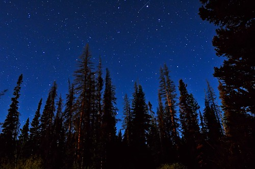 blue camping trees sky nature silhouette pine night stars landscape evening nikon colorado nightscape nocturnal indigo astrophotography co astronomy universe nocturne eyecandy afterdark bigcreek onblue d300 zirkel catchycolorsblue confier clff mywinners goldstaraward life~asiseeit
