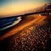 sea song by Maya Newman