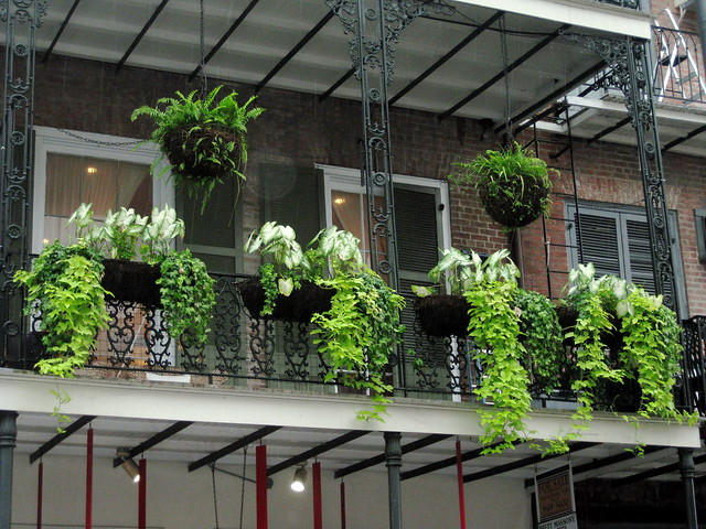 1000 images about balconies terraces plants on for Plants decoration in balcony