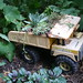 Kids' dumptruck as succulent planter