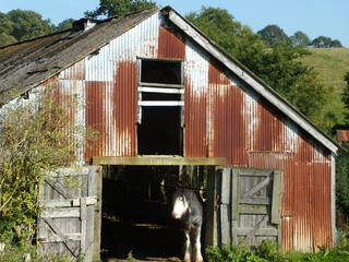 Horse's house
