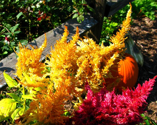 Fall is a great time to buy and plant plants shrubs and trees the garden lady - Flowers to plant in the fall ...