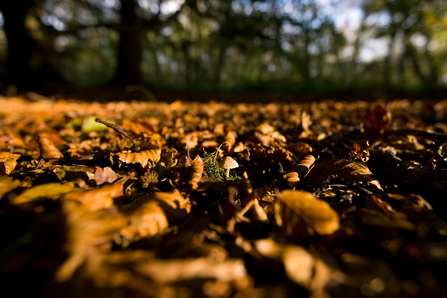 Forest floor definition meaning for Forest floor definition