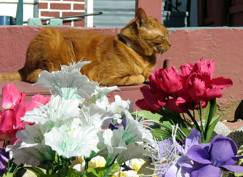 Cat with Artificial Flowers