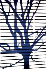 Tree Shadow on Fence