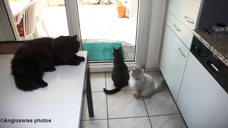 Three cats waiting to go out