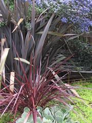 arecales, shrub, flower, garden, leaf, tree, ti plant, plant, flora,