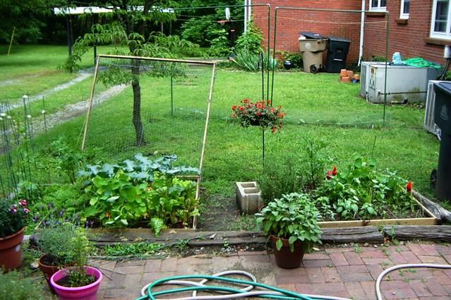 Backyard Garden June 3 Flickr Photo Sharing