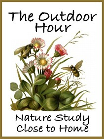 Outdoor Hour button