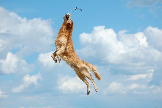 Jumping Hot Dog