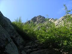 Couloir d'aulnes sous la face W du Capu Tafunatu