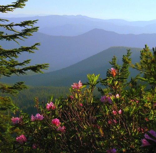 pink blue foothills oregon forest mt national hood wildflowers