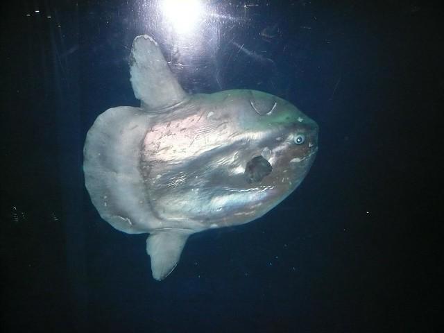 Aquarium Moa