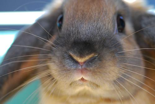 Yep, still got the cuteness in me by Jan & Peggy