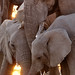 Three Elephants, Etosha National Park, Namibia by davidkiene