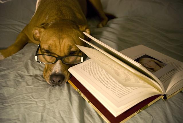 Hipster Dog Bed