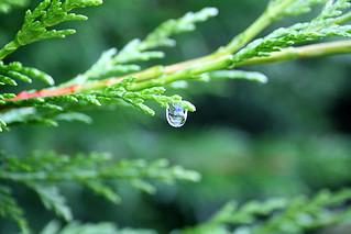 The last raindrop