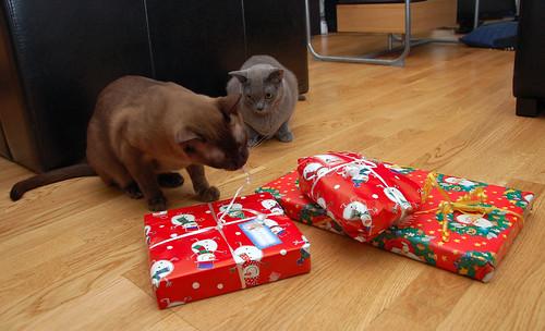 Zu Weihnachten sollte jeder was bekommen. Auch die Katzen.