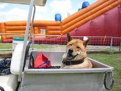 Buddy wanted to go down the slide, but wasn't tall enough.
