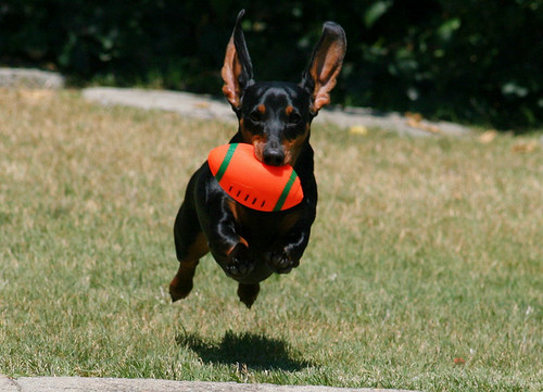 Flying Weenie