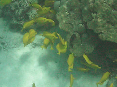 coral reef, fish, marine biology, green, underwater,